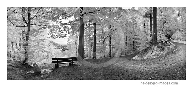Archiv-Nr. h2011141 | Haarlasweg im Wald