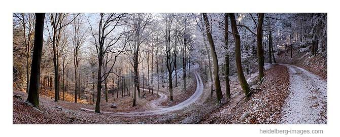 Archiv-Nr. hc2007194 | verschneiter Waldweg am Heiligenberg