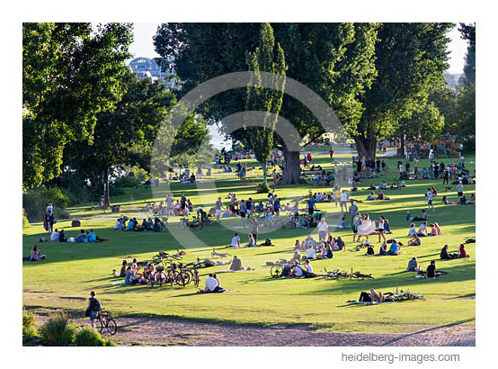 Archiv-Nr. hc2012140  Neckarwiese im Sommer