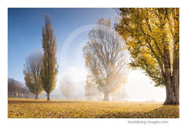 Archiv-Nr. hc2018135 / Herbstliche Neckarwiese, Neuenheim
