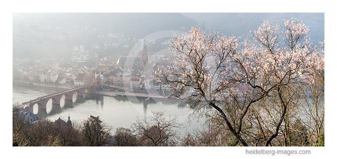 Archiv-Nr. hc2015117 | Heidelberg, Frühlingserwachen über der Altstadt