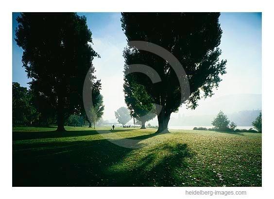 Archiv-Nr. hc2001124 | Sommermorgen an der Neckarwiese