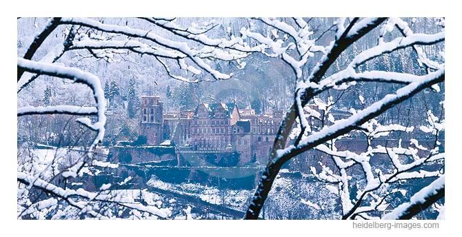 Archiv-Nr. hc96109 / verschneite Äste u. Heidelberger Schloss