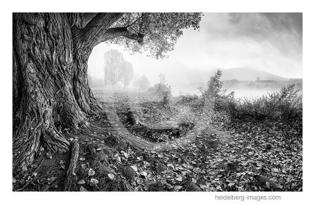 Archiv-Nr. h2017162 | Herbstliche Neckarwiese im Nebel