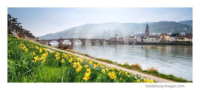Archiv-Nr. hc2014132 / Narzissenblüte am Neckar