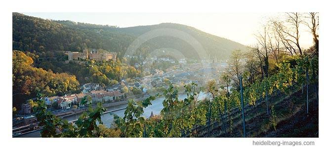 Archiv-Nr. hc97156 / Blick über die Weinberge auf Heidelberg