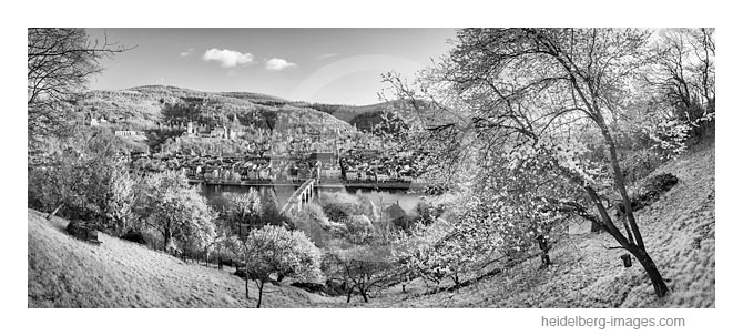 Archiv-Nr. h2016107 | Heidelberg im Frühling