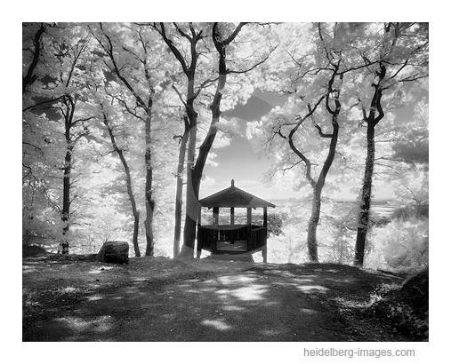 Archiv-Nr. h2007136 | Fuchsrondell