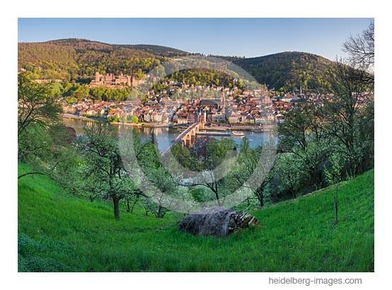 Archiv-Nr. hc2013122 | Heidelberg im Frühling