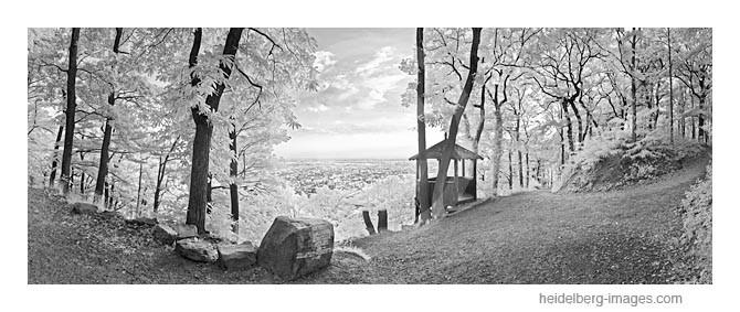 Archiv-Nr. h2011114 | Fuchsrondel