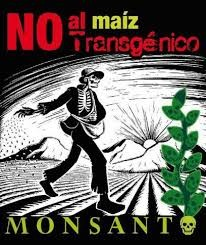 NO AL MAIZ DE MONSANTO