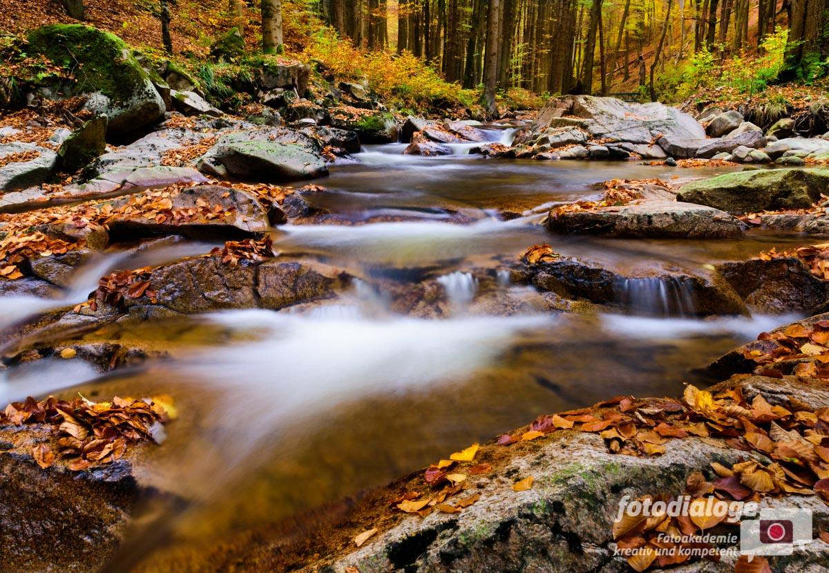 Fotografieren im Herbst: 6 Tipps für stimmungsvolle Fotos