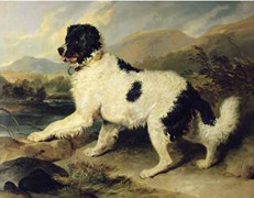 Newfoundland Dog Called Lion - Dated 1824