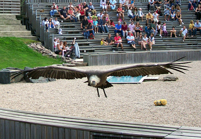 Spectacle de rapaces, Parc de Courzieu
