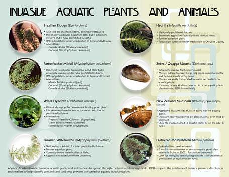 Aquatic Invasive Species Program Oregon Waterways