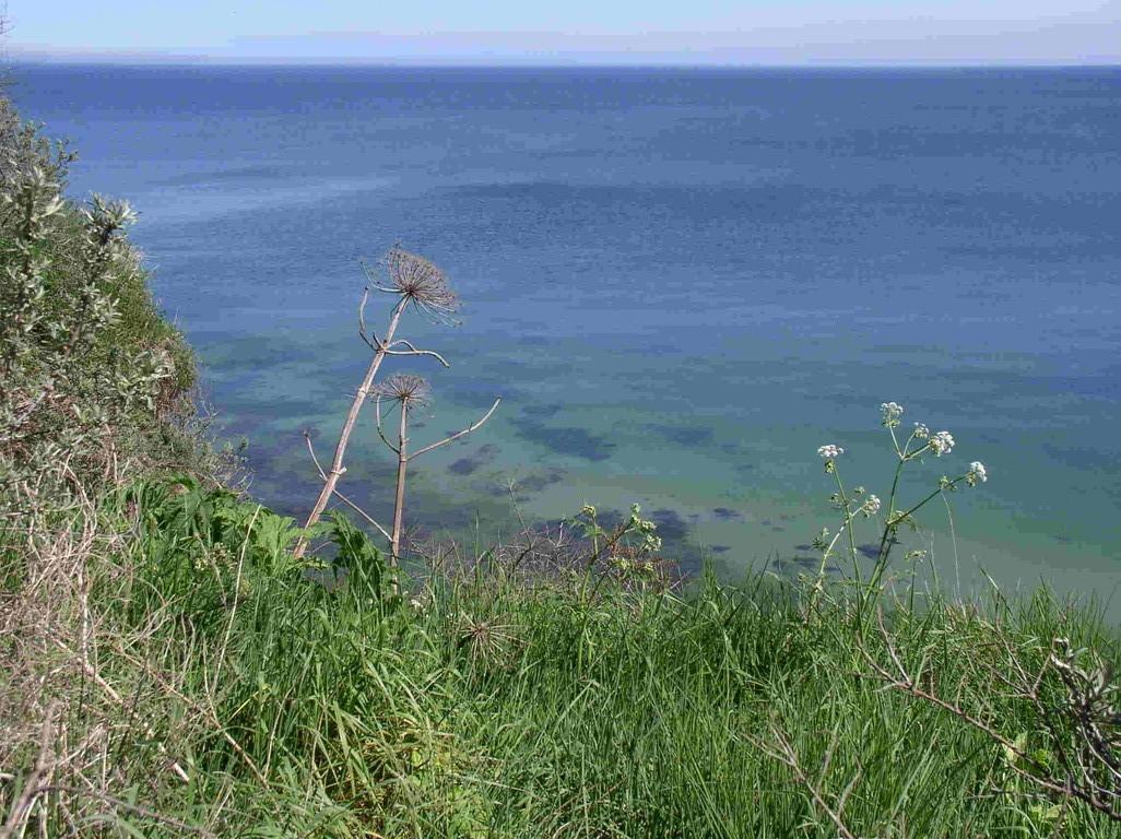 Küste vor Kap Arcona