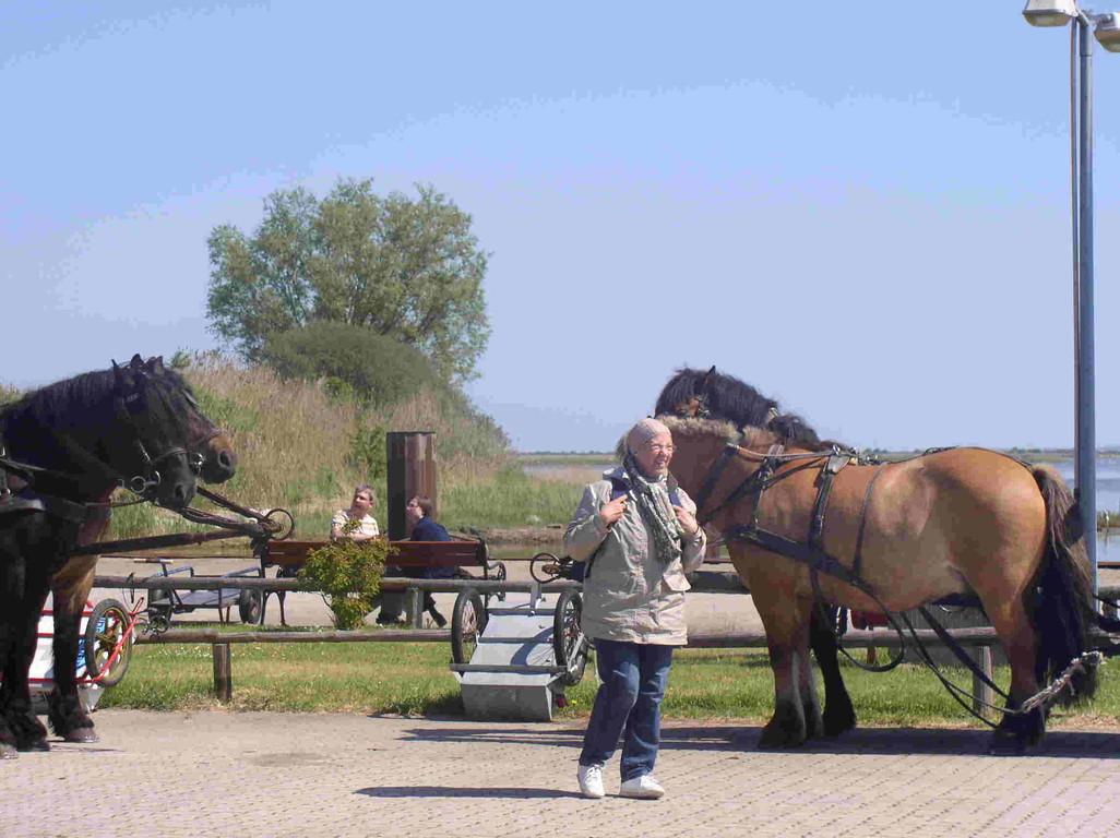 Pferde Taxi.