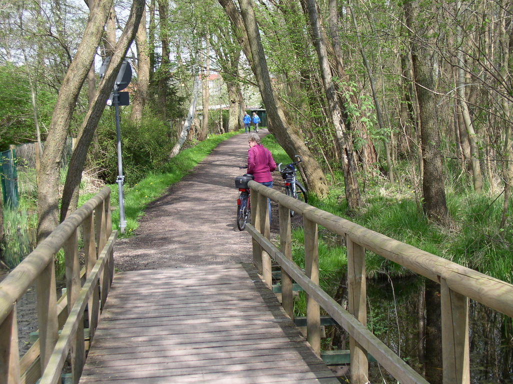 Brücke im Nationalpark.