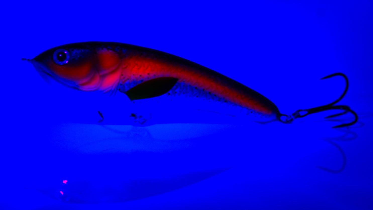 """""""Forelle UV"""" (UV-Ansicht)"""