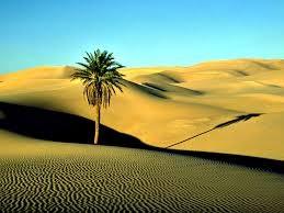 Le désert du Sahara en Libye. By Victor Kornyenko/Wikicommons [CC BY-SA 3.0] Le soleil, frappant à la verticale, envoie très loin l'ombre du palmier, seule végétation visible au milieu de l'immense étendue de sable.