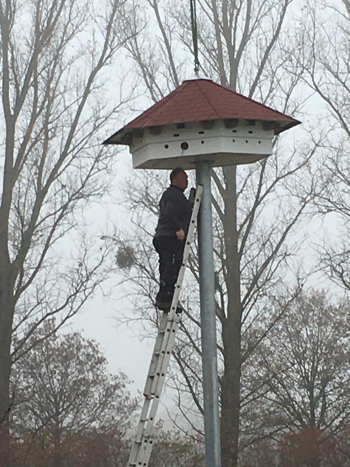 letzte Inspektion und dann können die Vögel und Fledermäuse kommen