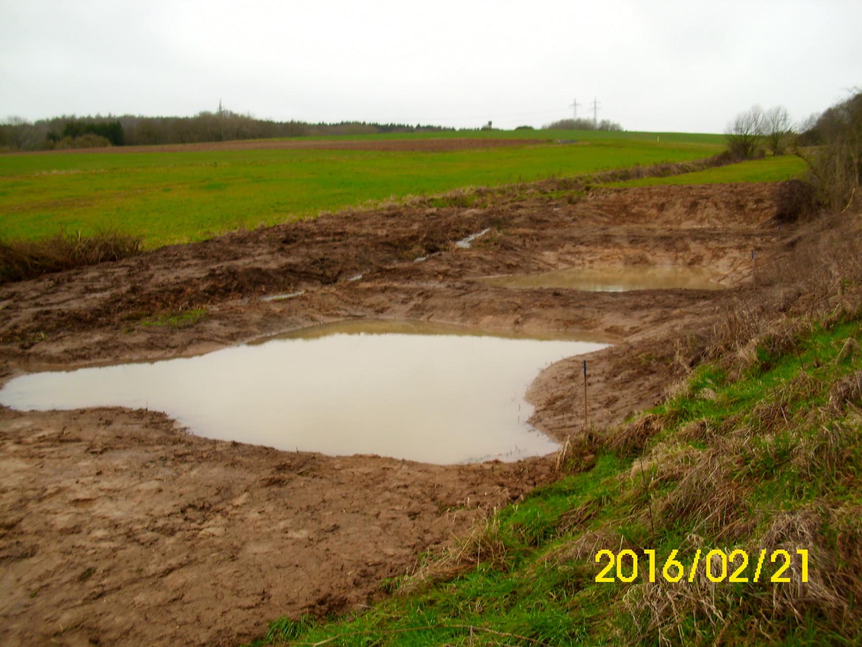 Die drei Teiche - das Biotop ist geschaffen