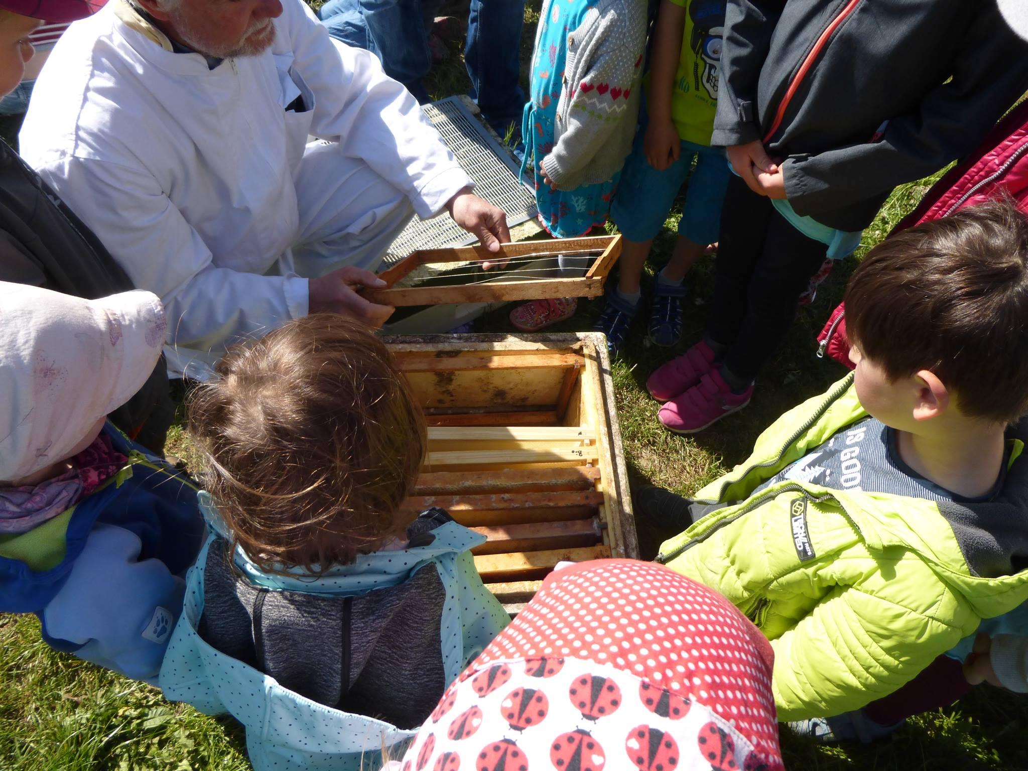 ... und gewährte Einblicke in den Bienenstock