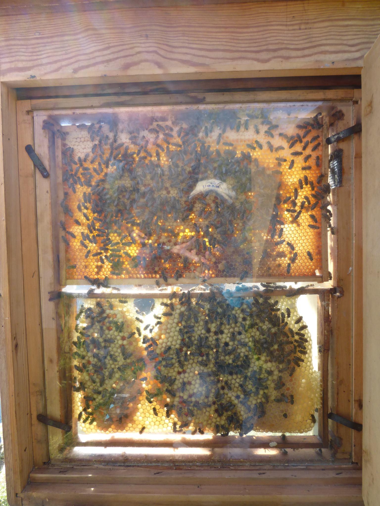 Dem Bienenvolk ganz nah