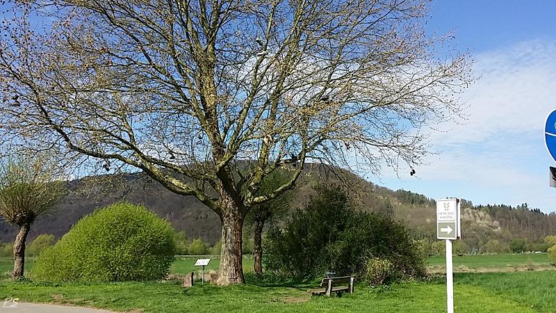 Ein Schuhbaum