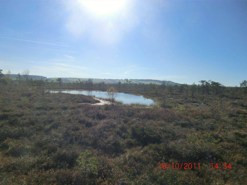 Natur pur im Schwarzen Moor im Dreiländereck