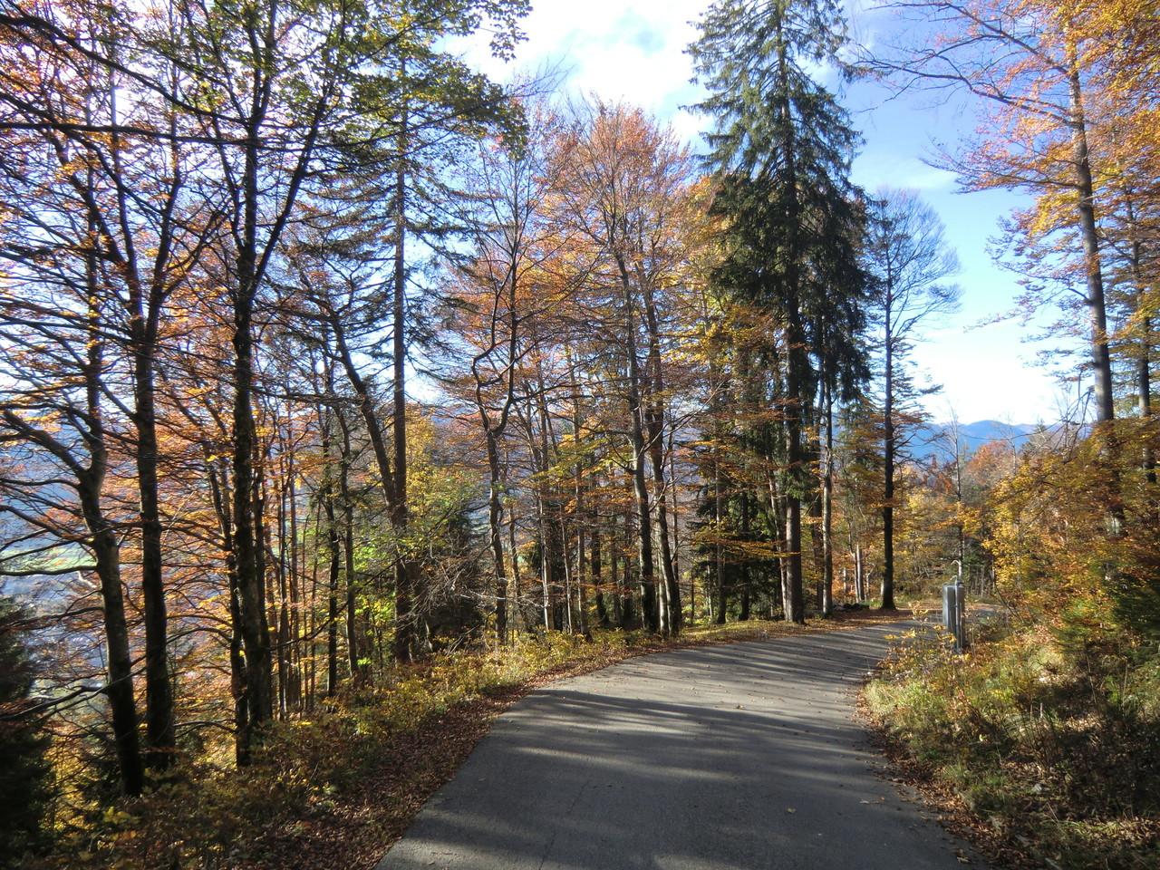 bergab durch herbstliche Wälder