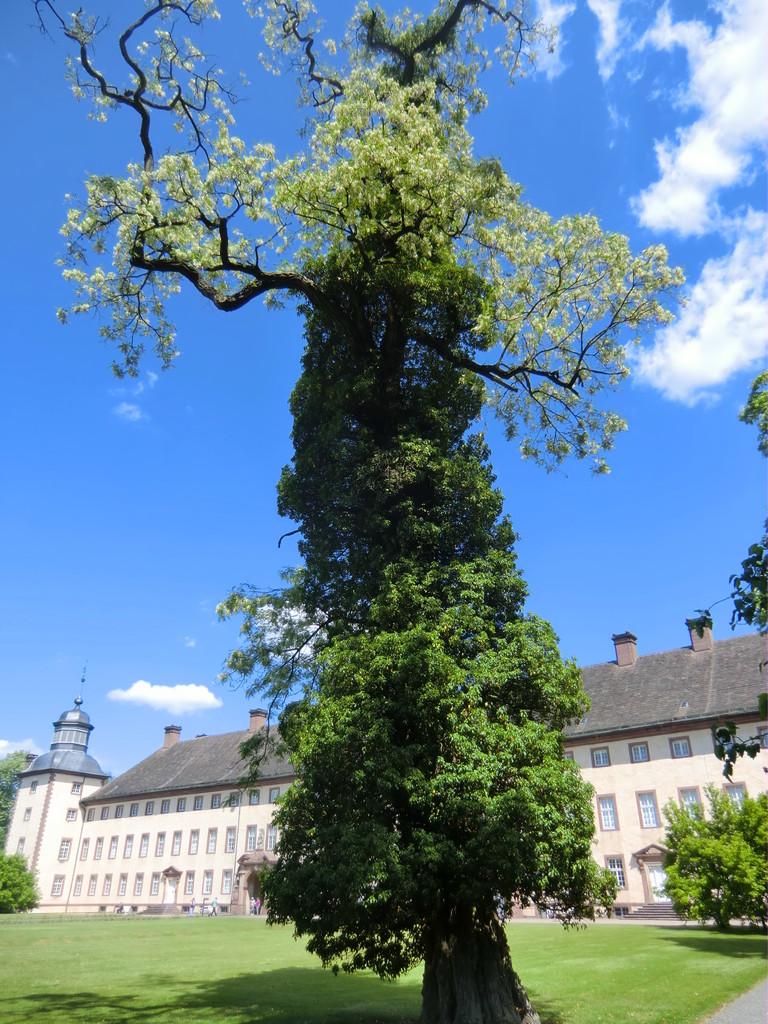 hier gibt´s urige Bäume