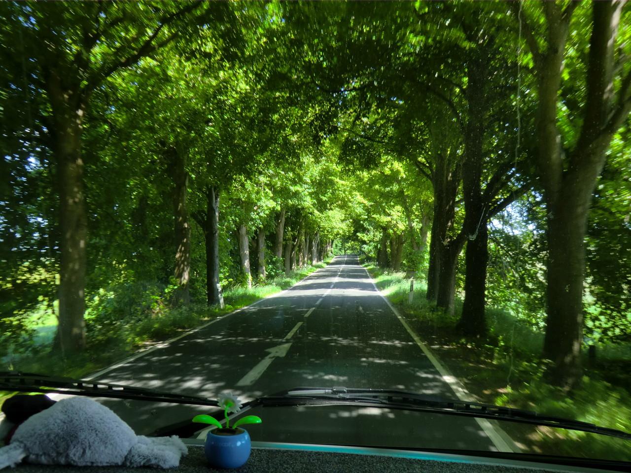 entlang von Baumalleen