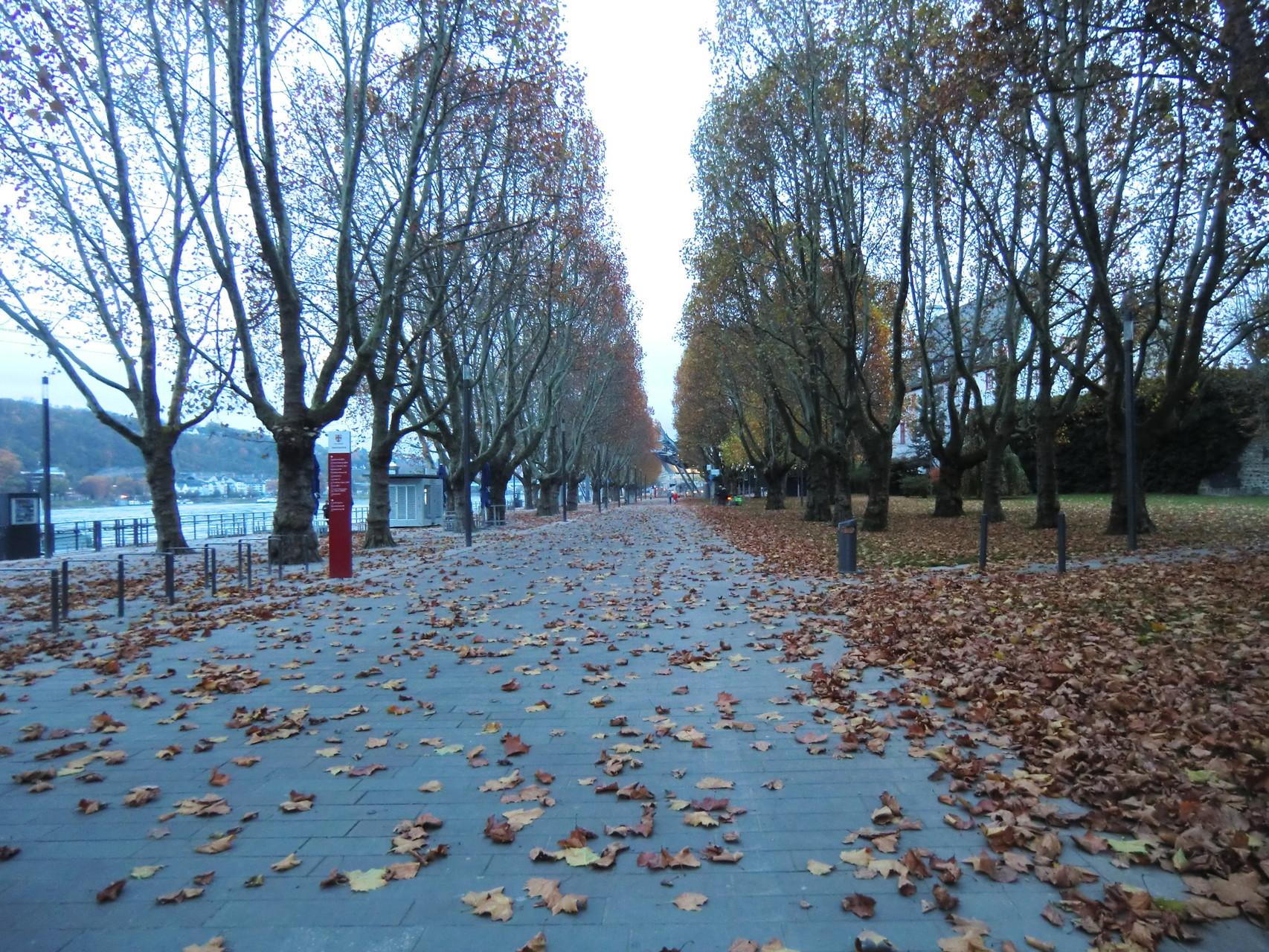 Herbst entlang der Rheinpromenade