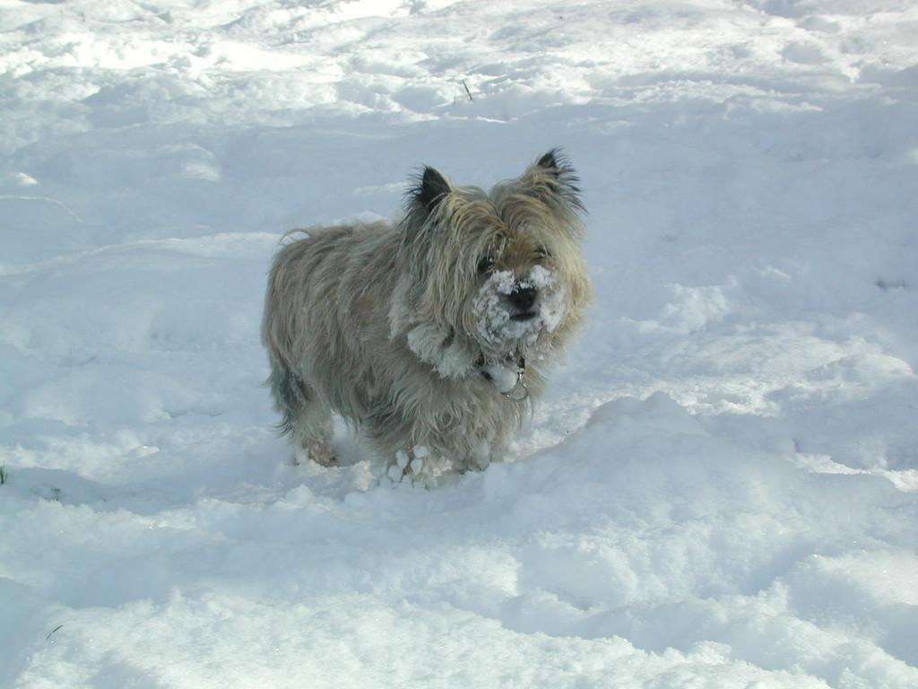 mein kleiner Freund Cooper vom Winterwald