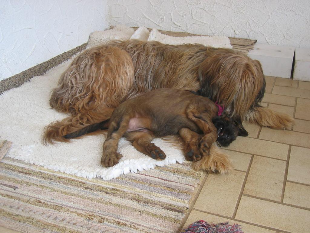 Kuscheln bei Mama Iuscha