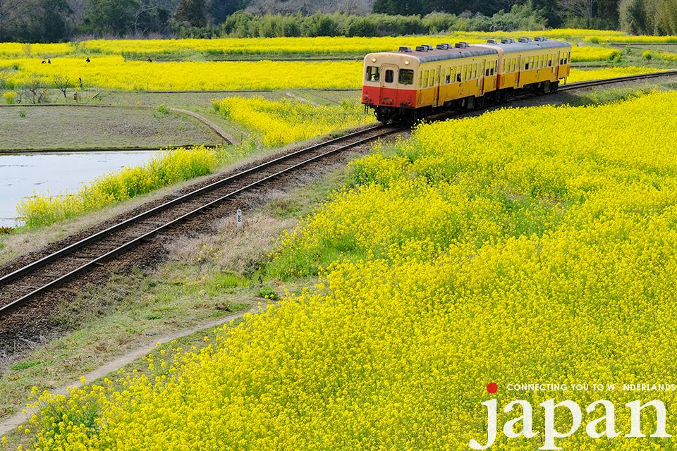 Boso Peninsula (Chiba) ©Takashi Sato