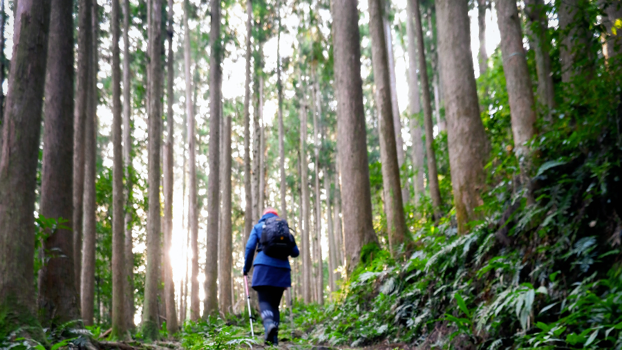 Most Popular and Fascinating Agriculture Tour in Wakayama