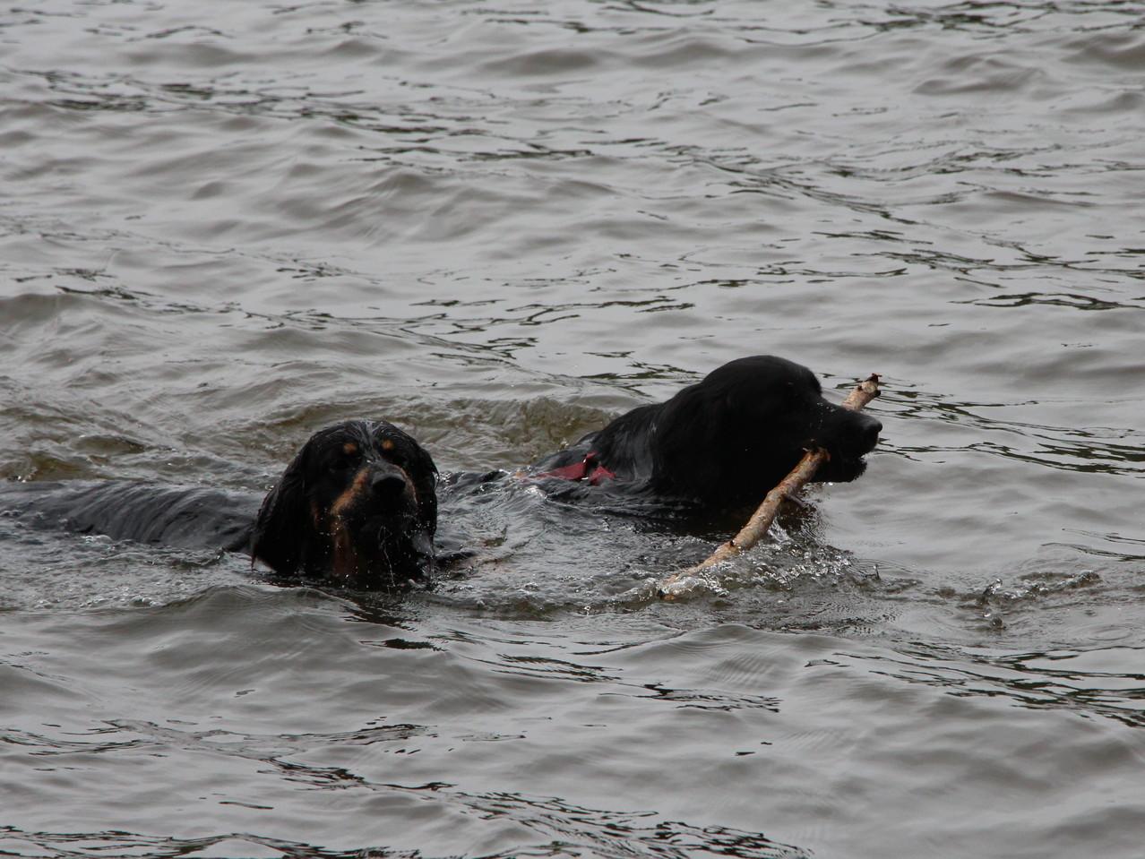 Gemeinsam im Wasser