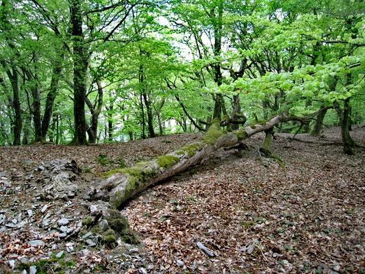 La forêt dans le Taunus