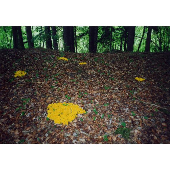 Egolffstein, Bayern / Taraxacum-Flecken / 2001