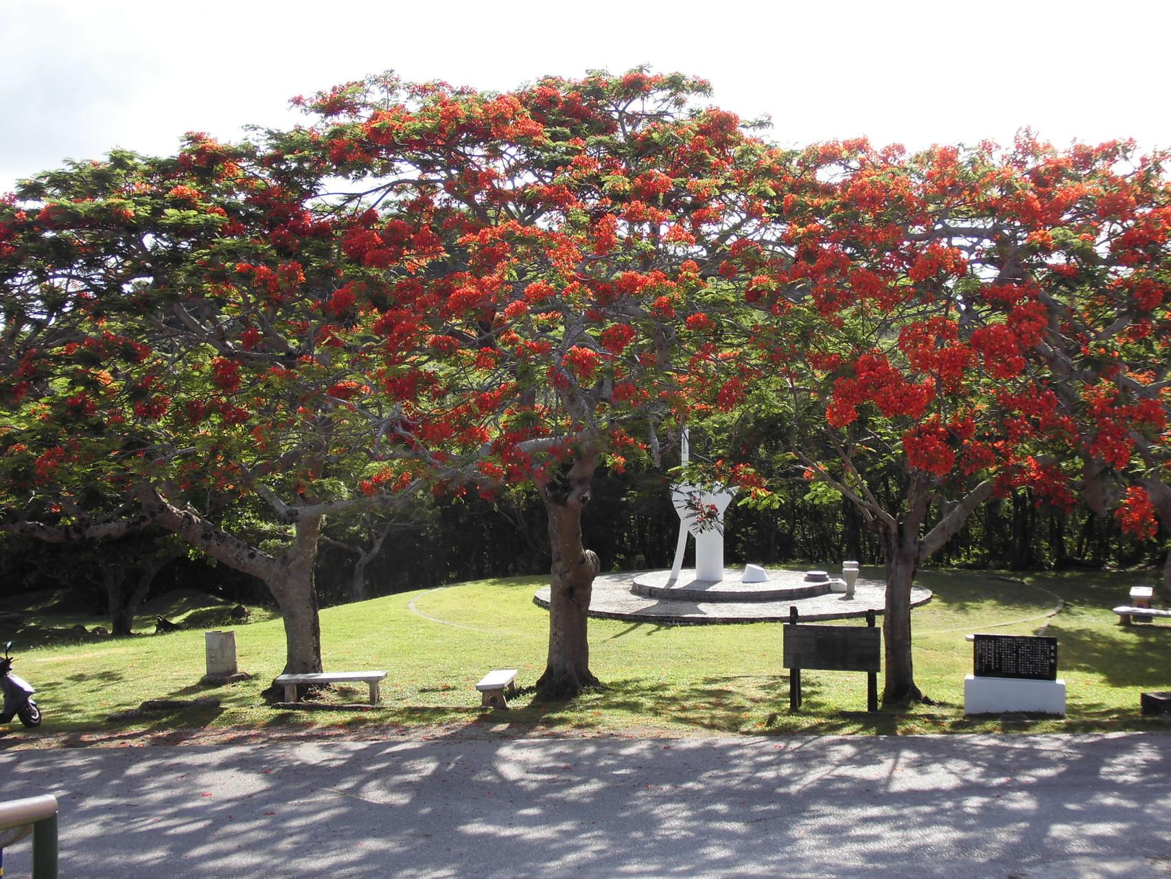 火炎樹(フレームツリー)