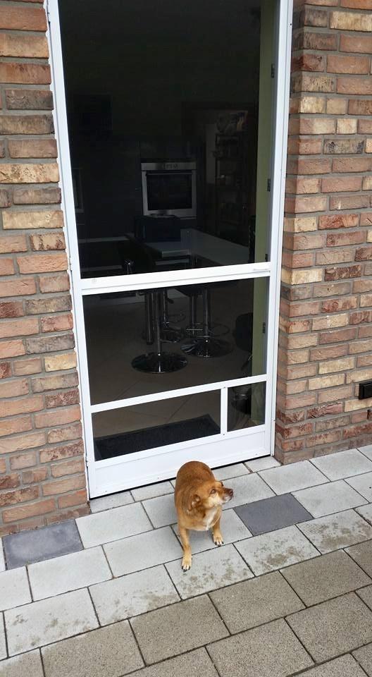 Drehtür mit Katzen oder Hundeklappe