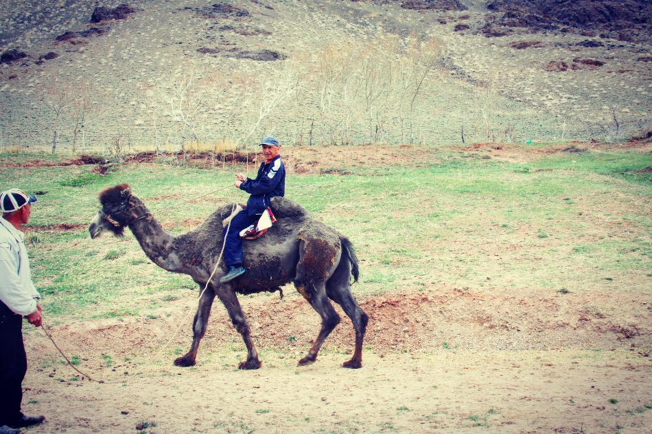 Camel Riding lesson in the village. South of Kyrgyzstan