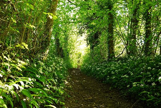 randonnée- le Sentier huguenot