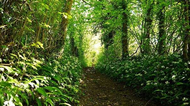 Le Sentier huguenot-de Beaussais à La Couarde
