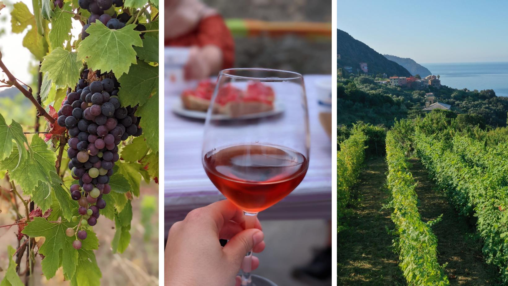 Ca' di Mare Wine Tour - Summer 2021