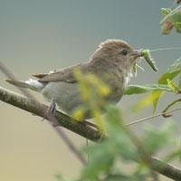 vogeltje met rups in snavel