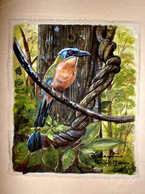 """""""Momoto de Diadema Azul, 2011"""" 20 x 30 cm."""
