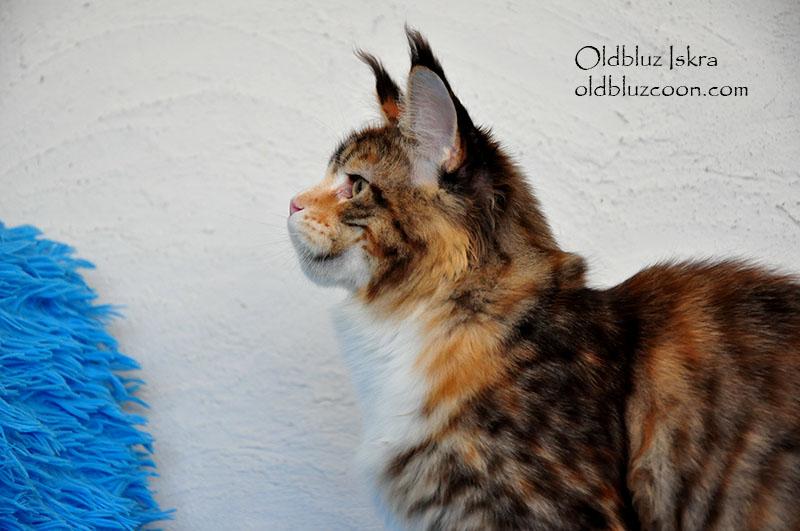 Oldbluz Iskra